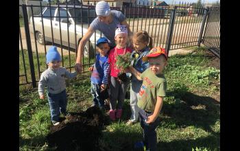 А дети наши посадили елочку!